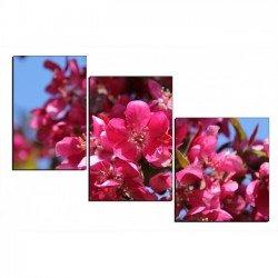 Фото на холсте Печать картин Репродукции и портреты - Цветущее дерево