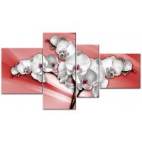 Цветная орхидея