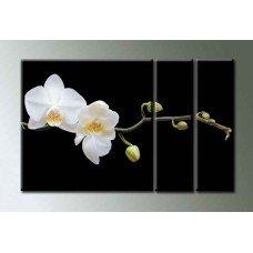 Картина на холсте по фото Модульные картины Печать портретов на холсте Орхидея