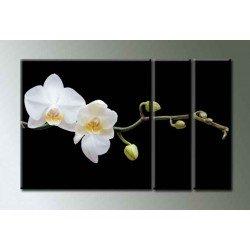 Фото на холсте Печать картин Репродукции и портреты - Орхидея