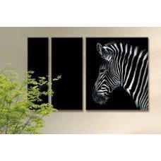 Картина на холсте по фото Модульные картины Печать портретов на холсте Одинокая зебра
