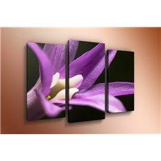 Картина на холсте по фото Модульные картины Печать портретов на холсте Модульная картина на дереве - m-000217