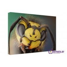 Картина на холсте по фото Модульные картины Печать портретов на холсте В мире насекомых