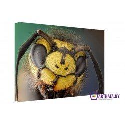 Фото на холсте Печать картин Репродукции и портреты - В мире насекомых