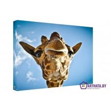 Картина на холсте по фото Модульные картины Печать портретов на холсте Господин Жираф
