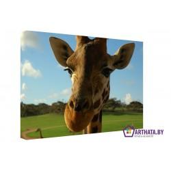 Фото на холсте Печать картин Репродукции и портреты - Грустный жираф