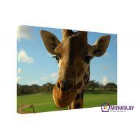 Портреты картины репродукции на заказ - Грустный жираф