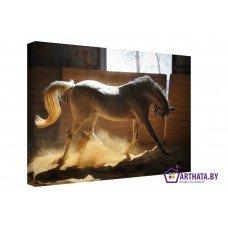 Картина на холсте по фото Модульные картины Печать портретов на холсте Белая грация