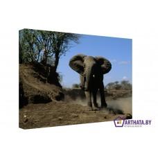 Картина на холсте по фото Модульные картины Печать портретов на холсте Слон в пустыне
