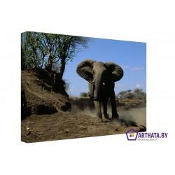 Слон в пустыне - Модульная картины, Репродукции, Декоративные панно, Декор стен