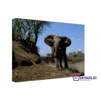 Слон в пустыне