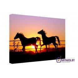 Фото на холсте Печать картин Репродукции и портреты - Лошади на закате