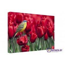 Картина на холсте по фото Модульные картины Печать портретов на холсте Поле тюльпанов