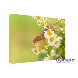 Фото на холсте Печать картин Репродукции и портреты - Полевая мышь