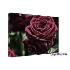 Картина на холсте по фото Модульные картины Печать портретов на холсте Красная роза