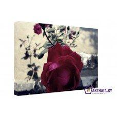 Картина на холсте по фото Модульные картины Печать портретов на холсте Куст розы