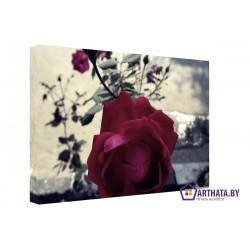Фото на холсте Печать картин Репродукции и портреты - Куст розы