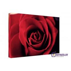 Яркая роза - Модульная картины, Репродукции, Декоративные панно, Декор стен