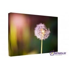 Картина на холсте по фото Модульные картины Печать портретов на холсте Одинокий цветок