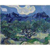 Оливковые деревья на фоне Альп