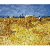 Урожай в Провансе