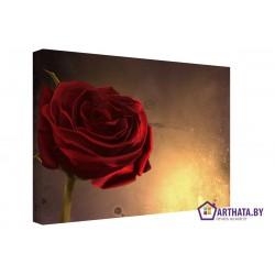 Фото на холсте Печать картин Репродукции и портреты - Винтажная роза