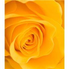 Картина на холсте по фото Модульные картины Печать портретов на холсте Желтая роза - Фотообои цветы|розы