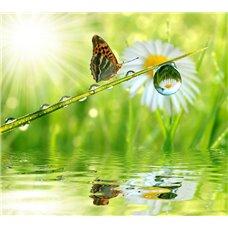 Картина на холсте по фото Модульные картины Печать портретов на холсте Капелька росы - Фотообои природа|бабочки