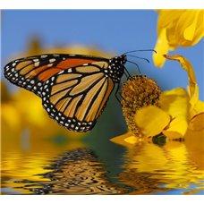 Картина на холсте по фото Модульные картины Печать портретов на холсте Бабочка над водой - Фотообои природа|бабочки