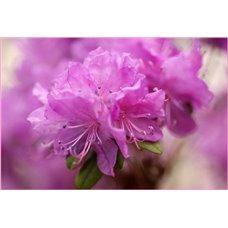 Картина на холсте по фото Модульные картины Печать портретов на холсте Цветущая ветвь - Фотообои цветы