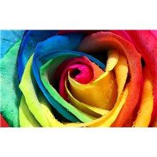 Картина на холсте по фото Модульные картины Печать портретов на холсте Разноцветная роза - Фотообои цветы|розы