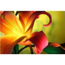Картина на холсте по фото Модульные картины Печать портретов на холсте Лилии - Фотообои цветы|лилии