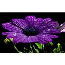 Картина на холсте по фото Модульные картины Печать портретов на холсте Герберы - Фотообои цветы|герберы