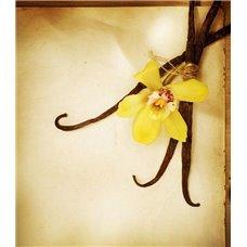 Картина на холсте по фото Модульные картины Печать портретов на холсте Цветок ванили - Фотообои Еда и напитки сладости