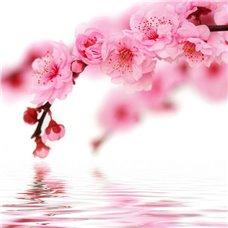 Картина на холсте по фото Модульные картины Печать портретов на холсте Над водой - Фотообои цветы цветущие деревья