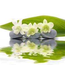 Картина на холсте по фото Модульные картины Печать портретов на холсте Белая орхидея - Фотообои цветы другие