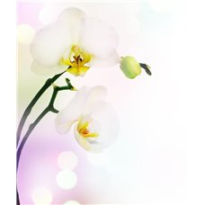 Картина на холсте по фото Модульные картины Печать портретов на холсте Ветка белой орхидеи - Фотообои цветы орхидеи
