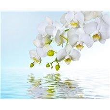 Картина на холсте по фото Модульные картины Печать портретов на холсте Веточка орхидеи - Фотообои цветы орхидеи