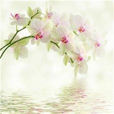 Картина на холсте по фото Модульные картины Печать портретов на холсте Орхидея над водой - Фотообои цветы орхидеи