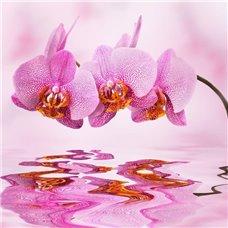 Картина на холсте по фото Модульные картины Печать портретов на холсте Розовая орхидея - Фотообои цветы орхидеи