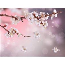Картина на холсте по фото Модульные картины Печать портретов на холсте Цветущая вишня - Фотообои цветы сакура