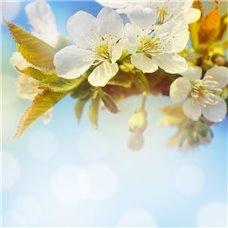 Картина на холсте по фото Модульные картины Печать портретов на холсте Цветущая ветвь - Фотообои цветы цветущие деревья