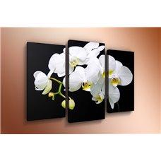 Картина на холсте по фото Модульные картины Печать портретов на холсте Модульная картина на холсте - m-000386