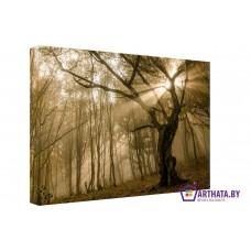 Картина на холсте по фото Модульные картины Печать портретов на холсте Лучи света