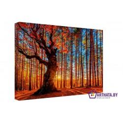 Закат солнца - Модульная картины, Репродукции, Декоративные панно, Декор стен