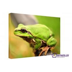 Лягушка - Модульная картины, Репродукции, Декоративные панно, Декор стен