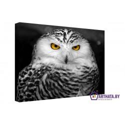 Фото на холсте Печать картин Репродукции и портреты - Взгляд совы