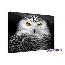 Взгляд совы - Модульная картины, Репродукции, Декоративные панно, Декор стен