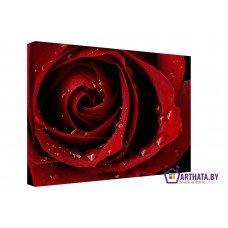 Картина на холсте по фото Модульные картины Печать портретов на холсте Бутон розы