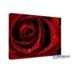 Фото на холсте Печать картин Репродукции и портреты - Бутон розы